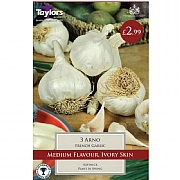 Grow Your Own French Arno Garlic