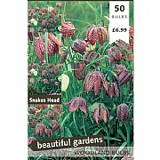 Fritillaria Meleagris (Snake Head) (50 Bulbs)
