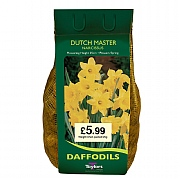 Narcissus 'Dutch Master' Carri-Pack 2kg