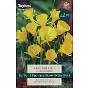 Narcissus 'Golden Bells' (10 Bulbs)