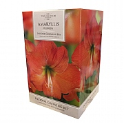 Amaryllis Florida Indoor Growing Kit