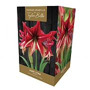 Amaryllis Ruby Star Indoor Growing Kit