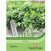 Thompson & Morgan Herb Lovage Seeds