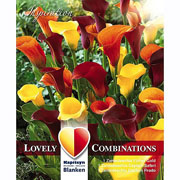 Zantedeschia Combinations Yellow, Orange & Purple (Pack of 3)