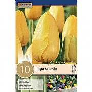 Tulip Single Muscadet - (10 Bulbs)