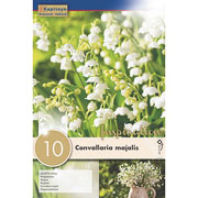 Convallaria majalis (Pack of 10)