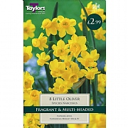 Narcissus Little Oliver (8 Bulbs)