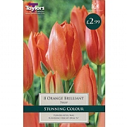 Tulip Orange Brilliant (10 Bulbs)