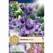 Gladiolus Passos (Pack of 10)