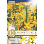 Crocosmia George Davidson (Pack of 10)