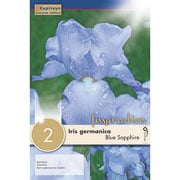 Iris germanica Blue Sapphire (Pack of 2)