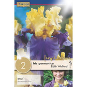 Iris germanica Edith Wolford (Pack of 2)