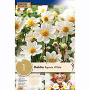 Dahlia Topmix White (Single)