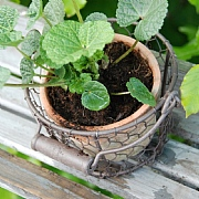 Aged Terracotta Pot In a Wire Basket With Handle