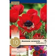 Anemone Hollandia (10 Bulbs)