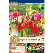 Tigridia Pavonia Mixed (Pack of 10)