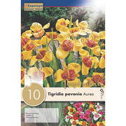 Tigridia pavonia Aurea (Pack of 10)