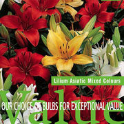 Lilium Asiatic Mix (Pack of 6)
