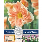 Narcissus 'Apricot Whirl' - (5 Bulbs)