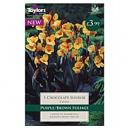 Canna Chocolate Sunrise - 1 Bulb