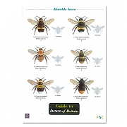 Wildlife World Field Guide to Bees Of Britain