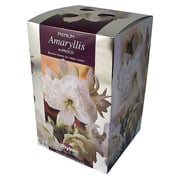 Amaryllis Alfresco Gift Pack