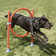 Pet Hoop Jump Set