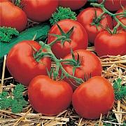 Tomato Ferline F1 Seeds