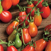 Tomato Red Pear Seeds
