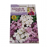 Mr Fothergills Sarah Raven Cutflower Collection Sweet Rocket Mixed