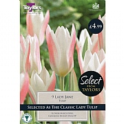 Tulip Lady Jane (10 Bulbs)