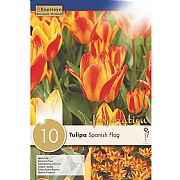 Tulipa Specie Spanish Flag (10 Bulbs)