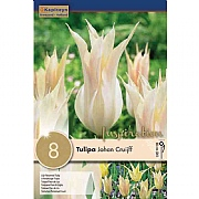 Tulip Lily Flowered Johan Cruijff (8 Bulbs)