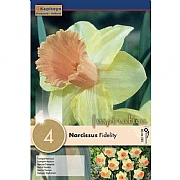 Narcissus Trumpet Fidelity (4 Bulbs)