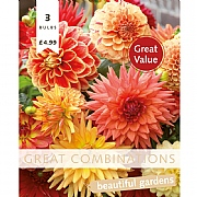 Dahlia Orange & Salmon Great Combinations Pack - 3 Bulbs