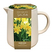 Narcissi Tete a Tete Indoor Ceramic Jug