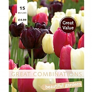 Great Combination Tulip Late Black, Pink & White (15 Bulbs)