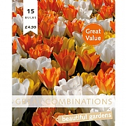 Great Combination Tulip White, Yellow & Orange (15 Bulbs)