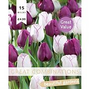 Great Combination Tulip Triumph Purple & White (15 Bulbs)