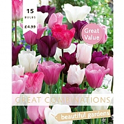 Great Combination Tulip Pink, White And Purple Blend (15 Bulbs)