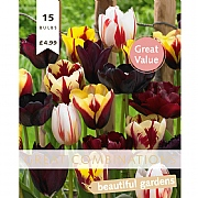 Great Combination Tulip Mystic Blend (15 Bulbs)