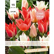 Great Combination Tulip Greigii Pastel Pink Blend (15 Bulbs)