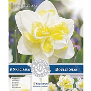 Narcissus 'Double Star' (5 Bulbs)