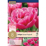Tulip Double Sunset Tropical (8 Bulbs)