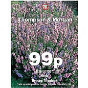 Thompson & Morgan Herb Hyssop Tricolour  Seeds