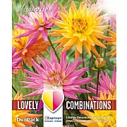 Dahlia Decorative Karma Pink & Orange Lovely Combinations - 3 Bulbs