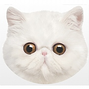 Pet Face Exotic Cat Cushion