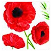 Modena Poppy Coasters 4 Pack