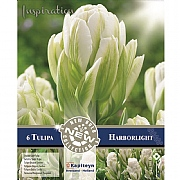 Tulip Double Harborlight (8 Bulbs)