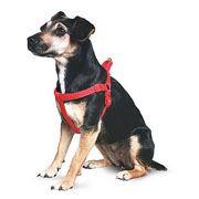 Ancol Red Padded Harness - Various Sizes